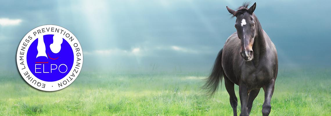 Equine Lameness Prevention Organization, Inc.